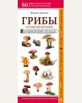 Куценко М. Грибы русских лесов и полей. Природа в кармане