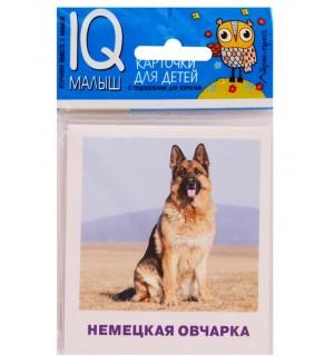 Породы собак. Комплект двусторонних карточек. IQ-малыш