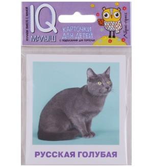 Набор карточек для детей. Породы кошек. IQ-малыш