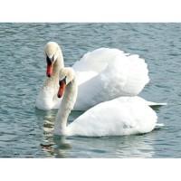 Папертоль «Белые лебеди». Размер 19х14 см